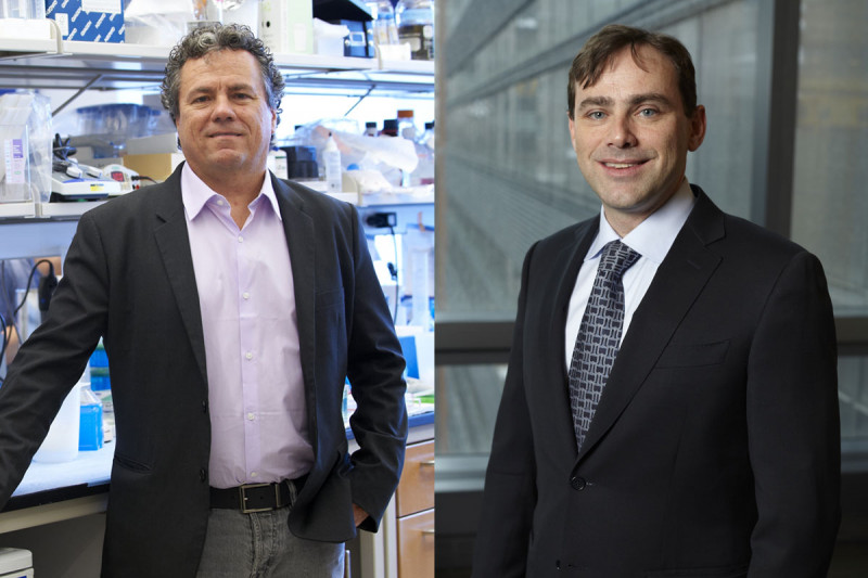 Biologist Scott Lowe and physician-scientist David Solit
