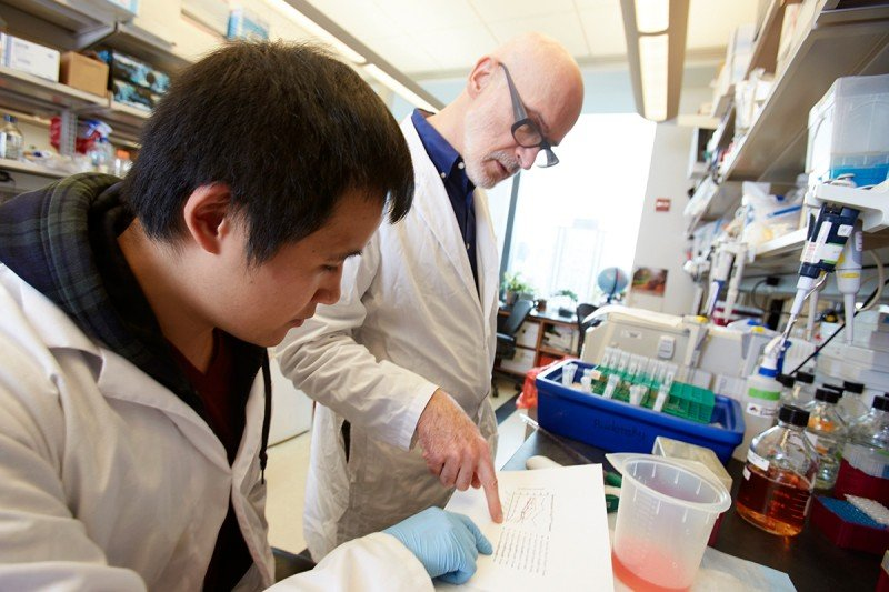 Discoveries made in the lab of Immunology Program Chair Alexander Rudensky have changed the field of immunology.